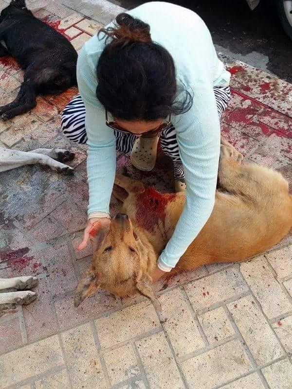 مجزرة الكلاب في الاسكندرية