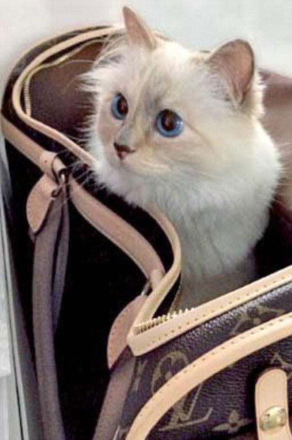 القطة الأكثر ترفًا ورفاهية في العالم تحصل على 3 ملايين دولار مقابل يومين عمل