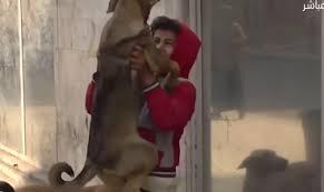 الراقص مع الكلاب